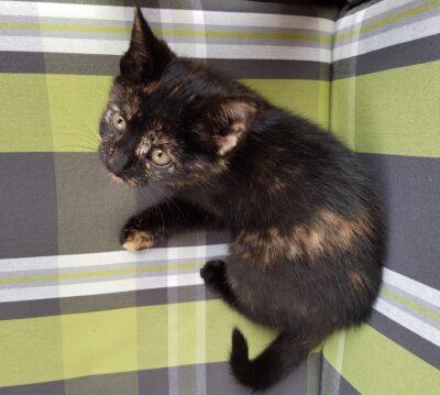 Katze Lotti vermisst in Neuffen seit 10.12.19