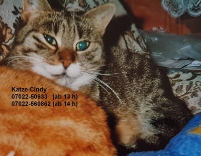 """Katze """"Cindy"""" sucht Zuhause"""