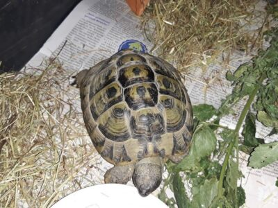 24.08.19 Landschildkröte in Neuhausen zugelaufen