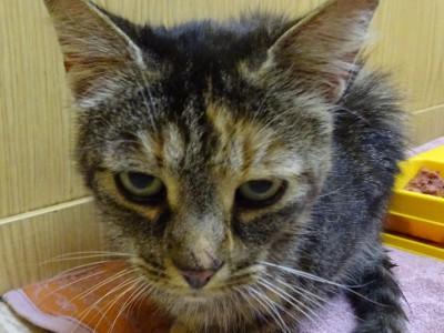 Katze am 09.08.17 in Beuren zugelaufen