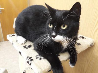 Schwarz-weiße Katze in Neckartailfingen gefunden