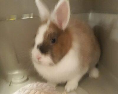 WIEDER ZUHAUSE 01.01.2020 Kaninchen in Kohlberg aufgefunden
