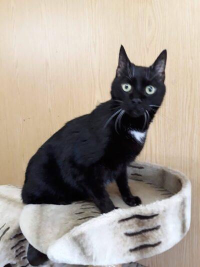 07.03.21 Katze vor Tierauffangstation ausgesetzt!