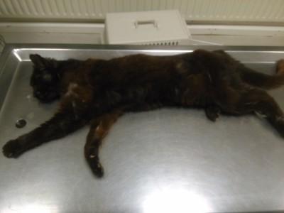 29.07.17 Schwarze Katze gefunden