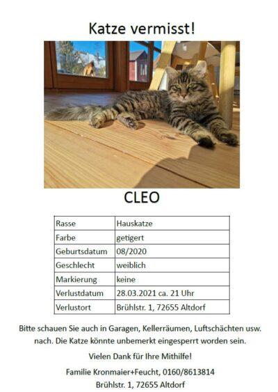 Katze Cleo seit 28.03.21 in Altdorf vermisst.