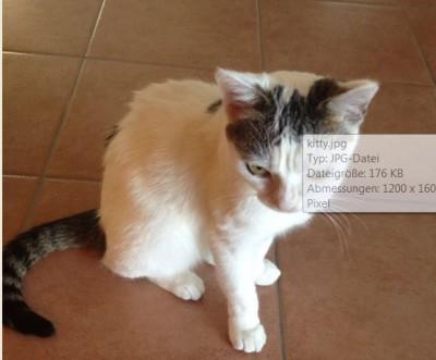 """Katze """"Kitty"""" seit 09.10.16 in Neuhausen vermisst"""